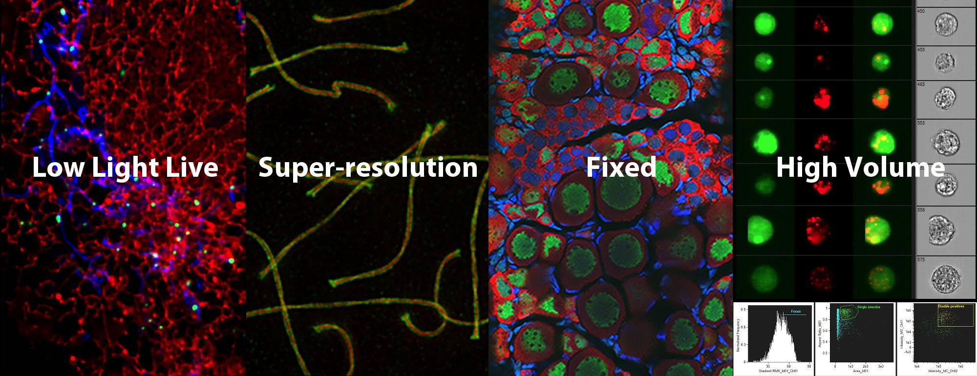 microscopy images with text